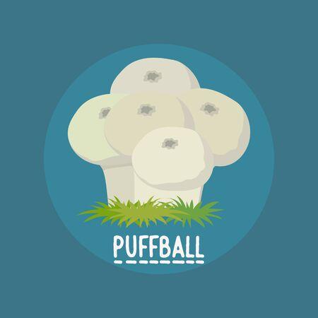 edible puffball mushrooms banner. vector illustration