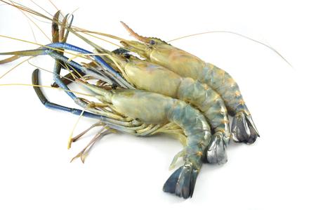 fresh shrimp isolated / raw shrimp on white background - the big blue claw shrimp or prawn for cook seafood (Macrobrachium rosenbergii) Stockfoto