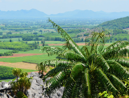 Cycas plant tree  green cycad growing on the rocky - cycad planted on hill or fern tree cycad cobia mountain landscape background Stock Photo