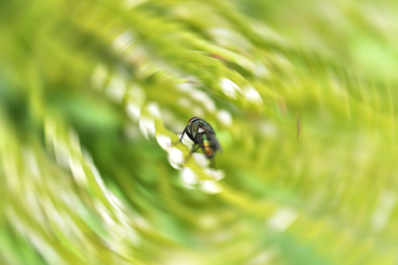 blur fly on green plant with rotate circle blurred background / close up green fly in nature