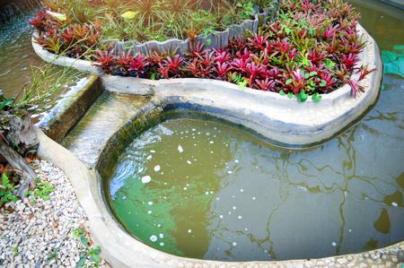 jardin d'étang avec des plantes / et petite cascade créant une pièce d'eau d'étang dans la cour avant du jardin