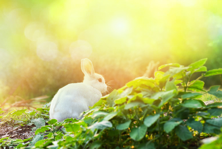 rabbit on nature  cute little white rabbit on garden spring grass green background - the bunny white rabbit on field summer green blur background