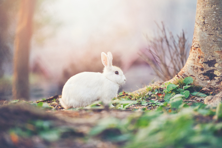 rabbit on nature / cute little white rabbit on autumn garden nature background - the bunny white rabbit on field forest