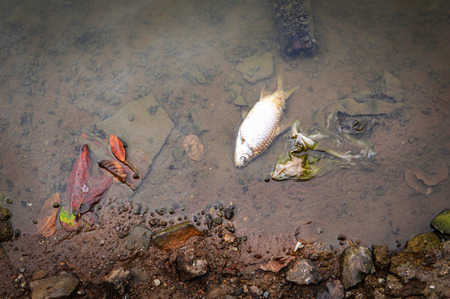 Dead fish floating surface in the dark water on river - water pollution Stock fotó