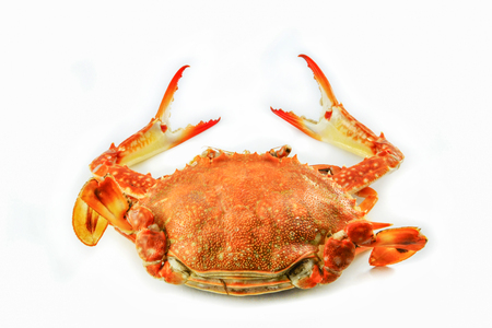 steam crab isolated on white background  cooked crab steamed seafood on white plate ready to serve  BLUE SWIMMING CRAB Stock Photo