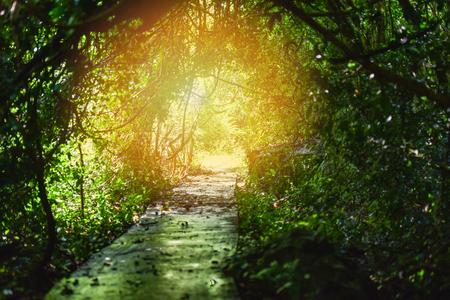 Naturtunnelbaum / Tunnellicht aus Sonnenlicht (Licht hinzugefügt) auf grünen Bäumen im Wald mit Weg