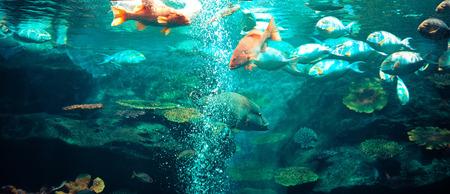 Marine life fish swimming underwater ocean colorful / Various types fish tank in big aquarium with beautiful coral reef