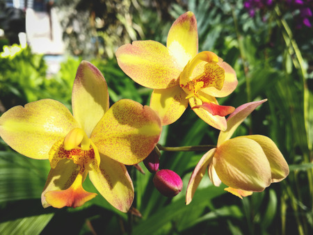 Yellow orchid flower nature blooming in the garden tropical pant