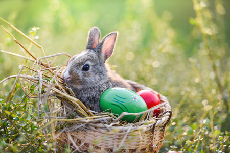 Easter eggs and Easter bunny on green grass outdoor  Little gray rabbit sitting on the basket nest with colorful eggs on field spring meadow bokeh nature background Stock Photo