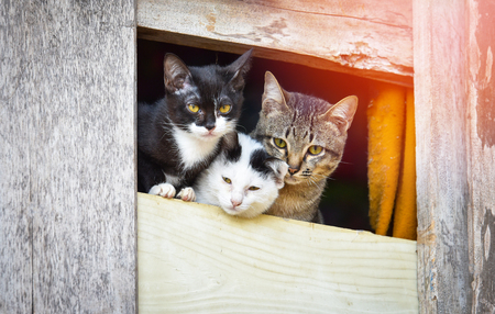 Asia kittens cute cat three white black and wrown tabby cat brethren on window looking outside Reklamní fotografie
