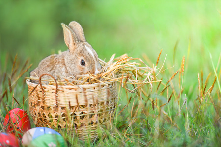 Easter bunny and Easter eggs on green grass outdoors / Little brown rabbit sitting basket nest and colorful eggs on field spring meadow