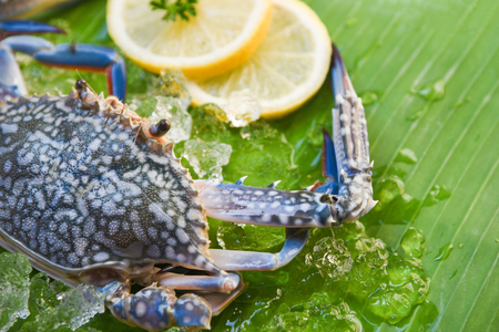 Fresh raw blue swimming crab seafood with ice and lemon on banana leaf background