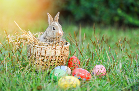 Easter bunny and Easter eggs on green grass field spring meadow 스톡 콘텐츠