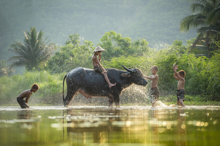 Asia children on river buffalo / The boys friend happy funny playing and shower animal buffalo water on river with palm tree tropical background in the countryside of living life kids farmer asian 免版税图像