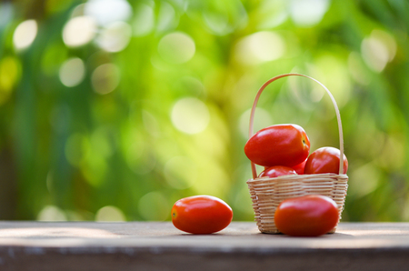Fresh tomato berry fruit in basket on wooden and nature green background - selective focus 写真素材