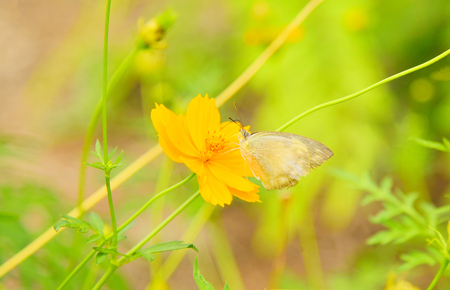 insect butterfly on yellow flower in the garden nature green background