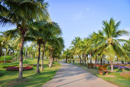 Giardino di palme e fiori primaverili nel sentiero del parco con palme che crescono e cielo blu