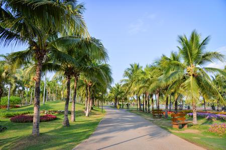 Jardín de palmeras y flores de primavera en el camino del parque con palmeras y cielo azul