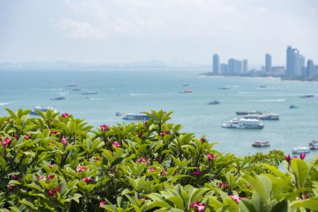 Pattaya city view point  Pink plumeria or frangipani flower on hill with pattaya beach sea and harbor landmark travel chonburi Thailand