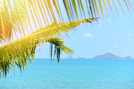 Coconut palm tree with sunlight on the summer ocean blue sky and islands tropical beach sea  Vacation holidays background