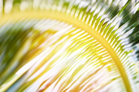 Coconut leaves  Fresh green palm leaf background tropical plant