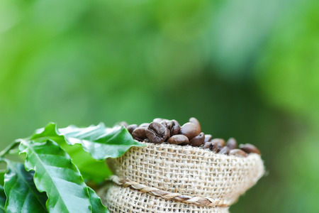 coffee beans in bag / Roasted coffee in sack with green leaf on wooden table and nature green background in the morning