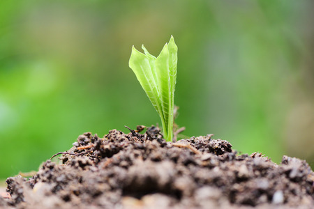 Young plant growth on neutral green background  Agriculture new plant seeding growing on soil in the garden