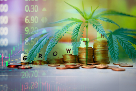 Cannabis Business marijuana leaves and stack of coins stock success market price up profit growth charts graph trading money industry trend grow higher quickly Reklamní fotografie - 124847860