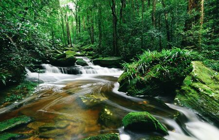 rainforest jungle with rock and green mos in the morning wild tropical forest  Mountain river stream waterfall green forest landscape nature plant tree
