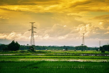 Landscape green rice field with electric pole high voltage and mountian sunset background