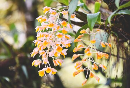 Wild orchids flower white and yellow beautiful on nature green forest background 写真素材