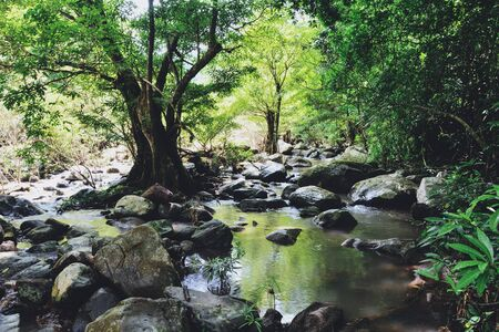 Rainforest jungle with rock and green mos in the wild tropical forest  Mountain river stream waterfall green tree landscape nature