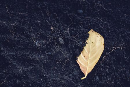 Yellow leaves on soil background  Dry leaf on ground 写真素材