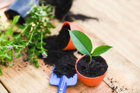 Planting flowers in pot with soil on wooden background  works of gardening tools small plant at back yard