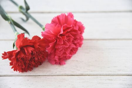 Red and pink carnation flower blooming on white wooden background