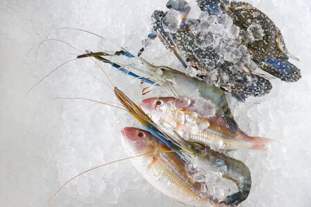 Fresh raw seafood on ice background  Shellfish shrimps prawns crab and fish ocean gourmet in the Seafood market