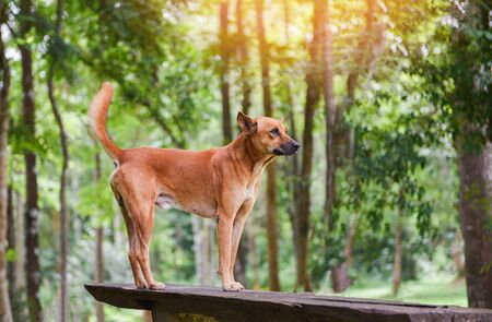 dog park standing on the wood and nature green tree forest background