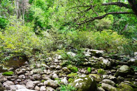 Rainforest jungle with rock and green mos in the wild tropical forest / Mountain river stream waterfall green tree landscape nature Imagens