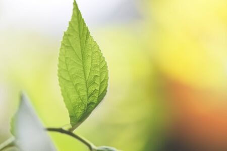 Natural green leaf on blurred sunlight  background in garden ecology fresh leaves tree close up beautiful plant in the nature forest