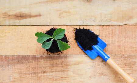 Planting young tree or flowers in pot with soil on wooden background / works of gardening tools small plant at back yard Standard-Bild - 128737384