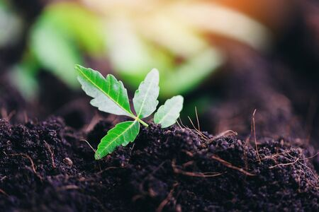 Gardening planting a tree seedlings young plant are growing on soil with  Save environment green world ecology concept
