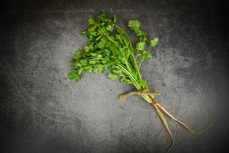 Fresh coriander leaf bunch for food vegetables spices herbs / Green coriander leaves on dark background