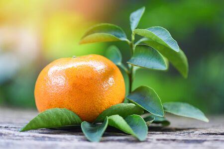 orange fruit and leaf on wooden with green garden background  Healthy fruits fresh orange Imagens