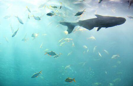 Marine life fish swimming underwater ocean colorful  Various types fish tank in big aquarium freshwater