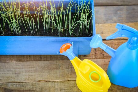 Watering plant with colorful watering can and pot in the garden  Gardening tools concept Фото со стока