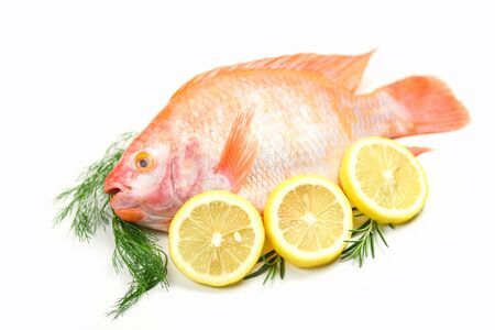 Fresh fish with herbs spices rosemary and lemon / Raw fish red tilapia isolated on white background