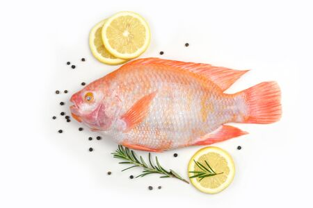 Fresh fish with herbs spices rosemary and lemon  Raw fish red tilapia isolated on white background