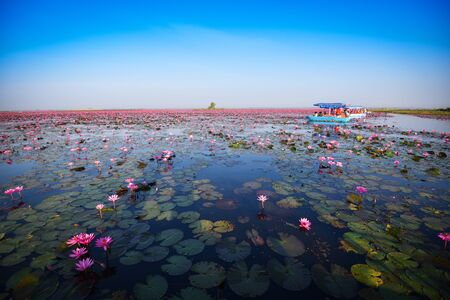 Tourist boat on the lake river with red lotus lily field pink flower on the water nature landscape in the morning landmark in Udon Thani Thailand