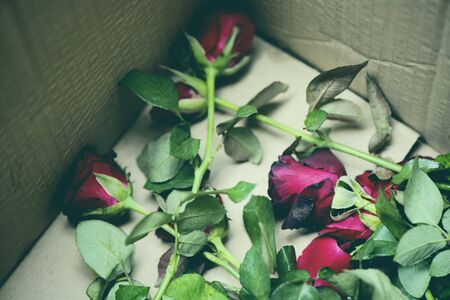 Rose flowers in parcel box  old roses on rubbish bin break my heart dumped love on valentine day concept