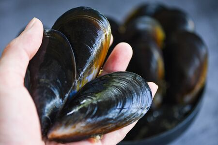 Raw Mussels on hand / Fresh seafood shellfish on ice in the restaurant or for sale in the market mussel shell food Stock Photo